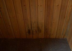 Schimmelschaden an einer Holzvertäfelung