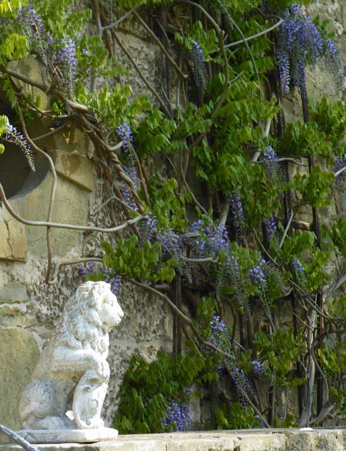 Strukturgebende Pflanzen im Garten