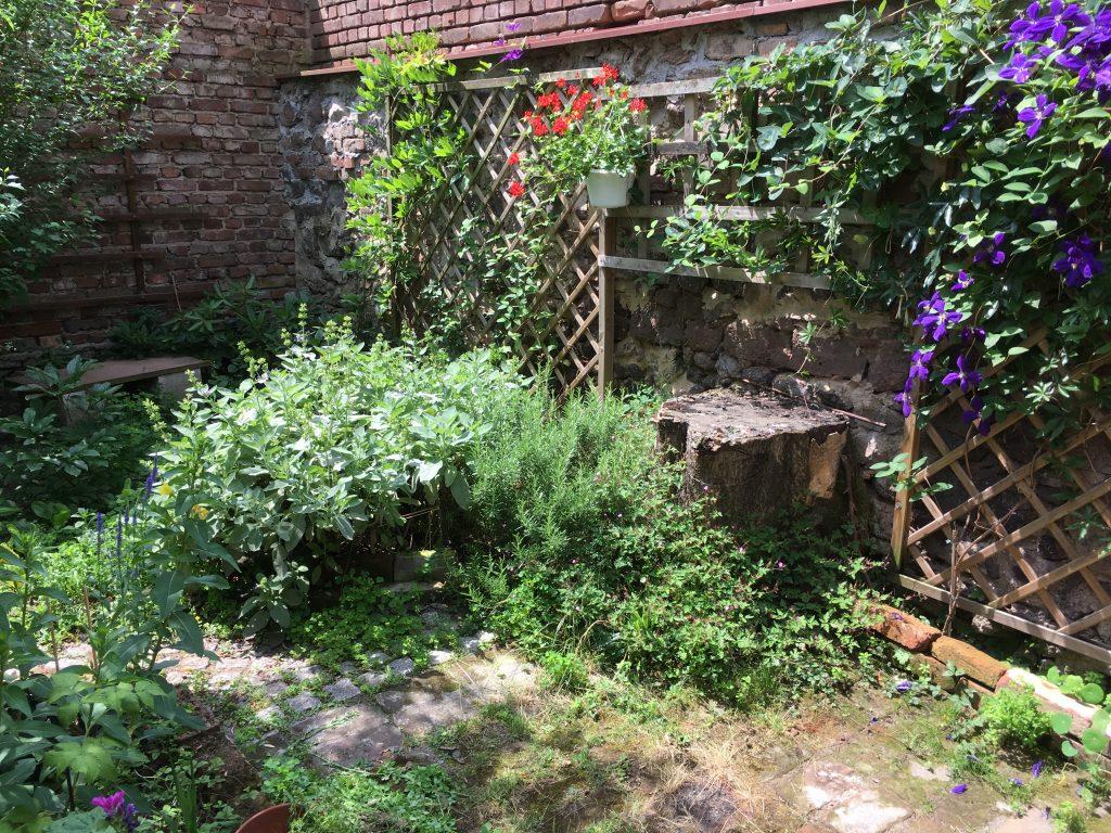 Mauerbewuchs und naturnahes Gärtnern